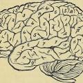 El Cerebro en el Neuromarketing
