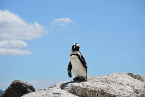 Penguin vigila tu link building