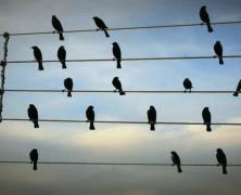 Birds musical notes – Gli uccelli sui fili elettrici trasformati in note musicali