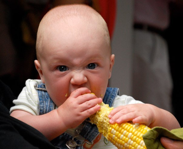 Spencer enjoys chewing on a corn cob at Mark and Carrie's