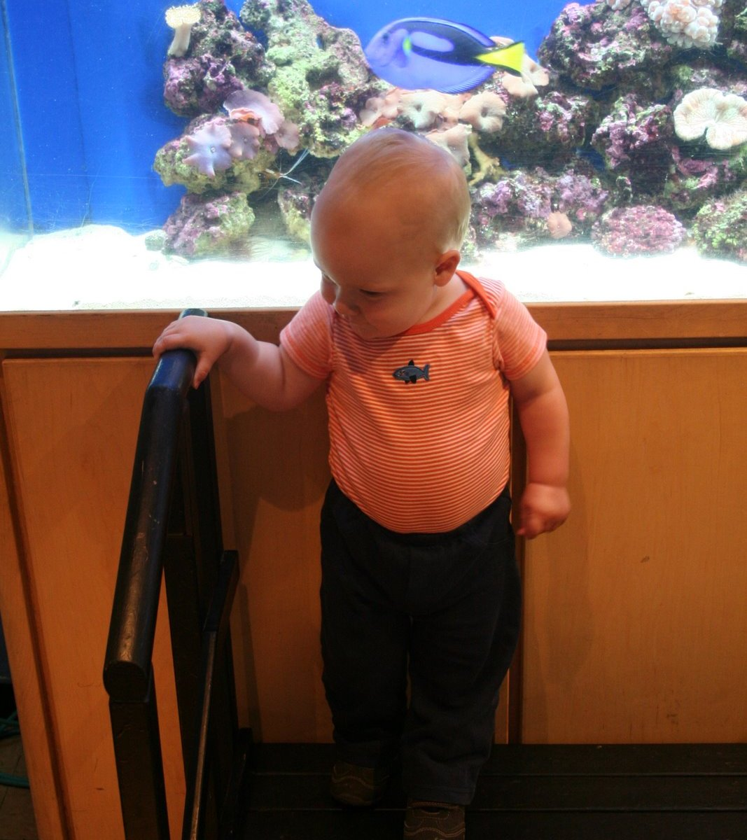 Spencer liked climbing the stairs by the fish