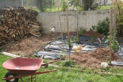 Garden progress - putting mulch over the weed block