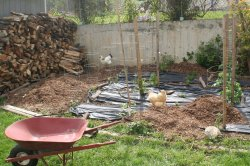 Garden progress - putting mulch over the weed block