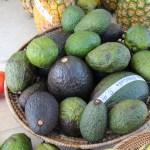 Gigantic avocados