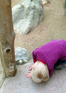 Ben investigates the turtle