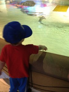 Spencer looks at the sharks