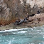 Sea lion colony by the arch