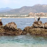 Pelicans hanging out on the rocks