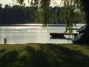 Geese on Horseshoe Lake