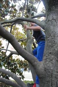 Spencer climbing a tree