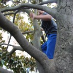 Spencer climbing a tree