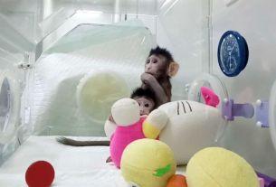 Dolly sheep,clone monkey,China