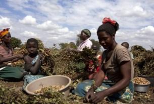 World Food Day, un, Hunger, World News
