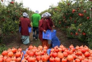 INI Farms