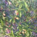 Many small fruits