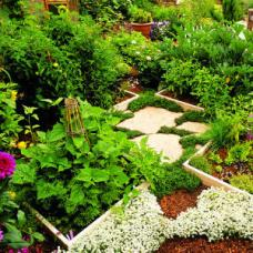 A lush, growing community garden.