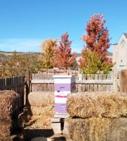 bees,honey,help the hungry,food for families