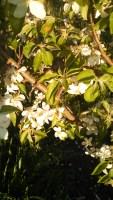 fruit trees,apple trees,community orchard denver