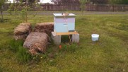 bees,bees for honey,bees in community orchard,littleton co, denver