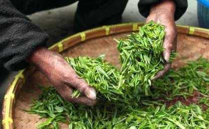 thé vert - Feelboost
