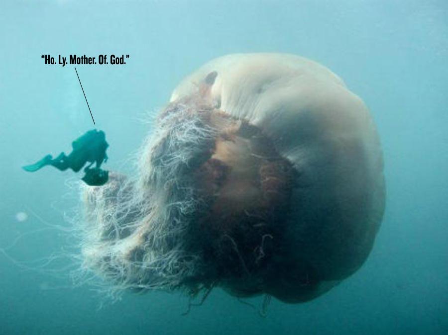 Large Lion Mane Jellyfish