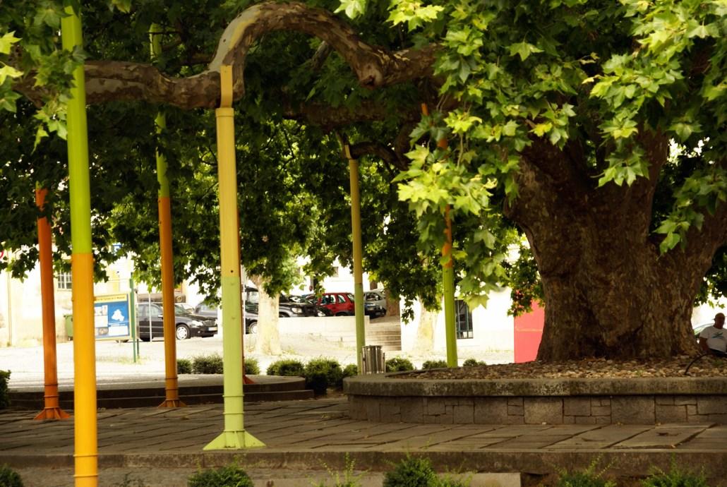Portalegre - Plátano Centenário
