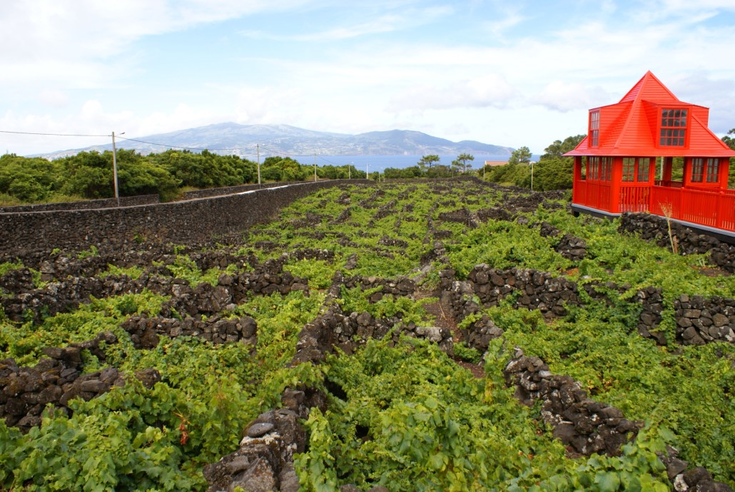 Museu do Vinho do Pico, Curraletas de vinha - Lagido da Madalena