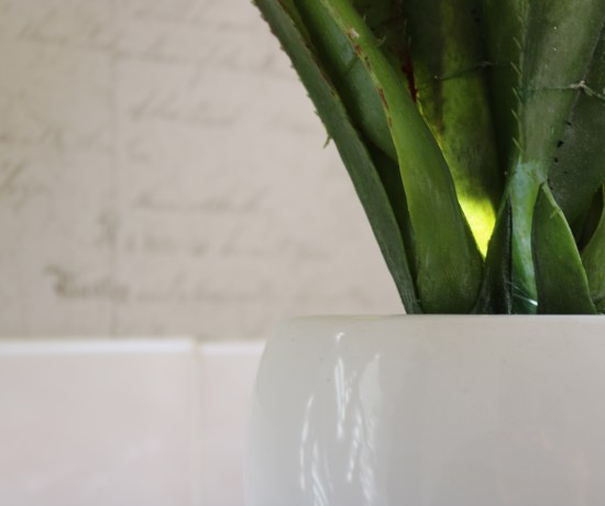 green plant in white vase with white background