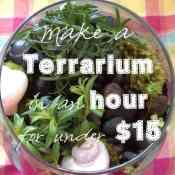 How to Make an Herb Terrarium for Under $15