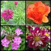 A Tour of My Garden