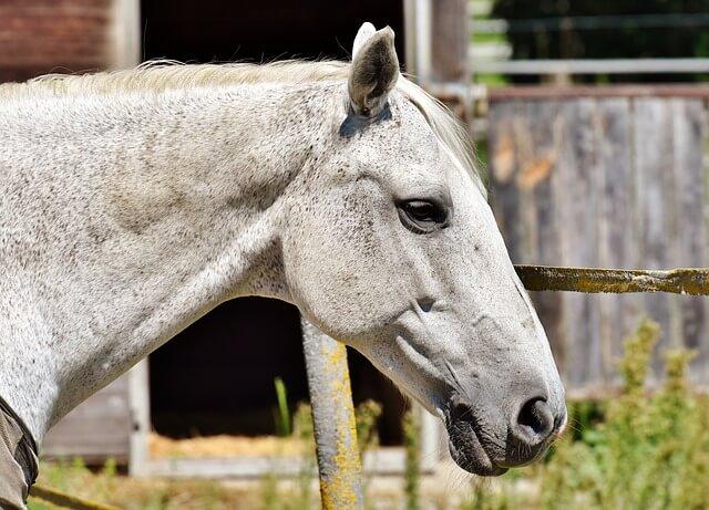 Het paard van sinterklaas is ziek