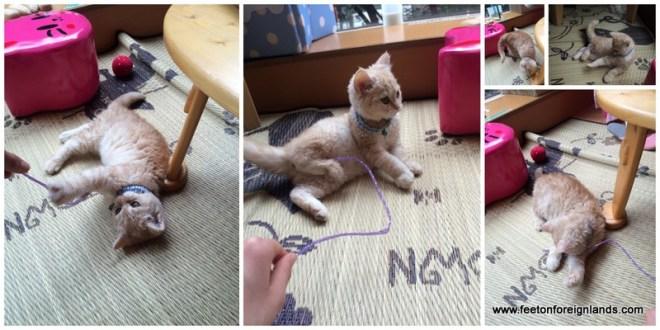 Tokyo's cat cafes: www.feetonforeignlands.com