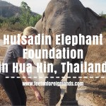 Walking with Tong Kam – Hutsadin Elephant Foundation in Hua Hin.
