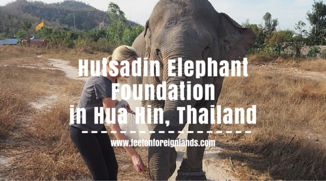 Hutsadin Elephant Foundation (1)
