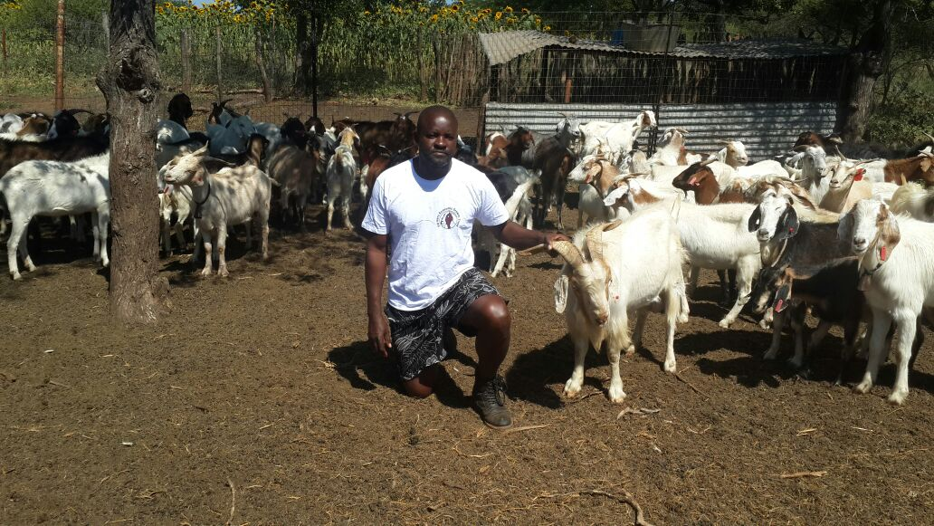 Mainstreaming gender in the commercialisation of meat goats and sheep reduces poverty and food insecurity