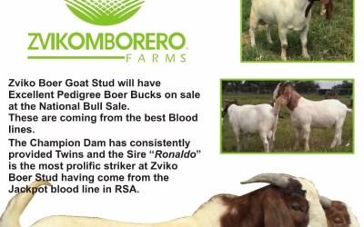 Quality Breeding Stock!