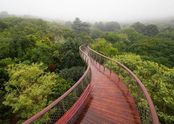ПАР запрошує туристів прогулятися над кронами дерев