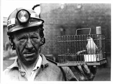 Image result for canaries in the mines