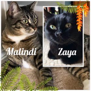 Malindi and Zaya