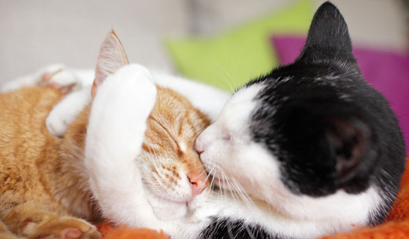 We'd all like to see our cats get along like this! (Image from goodhousekeeping.com.)