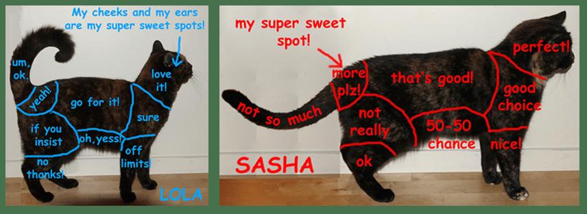 Lola and Sasha Petting Zones