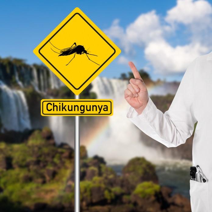 Semente de sucupira diminui as dores da chikungunya