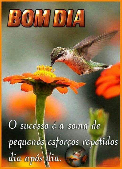 WhatsApp Bom Dia