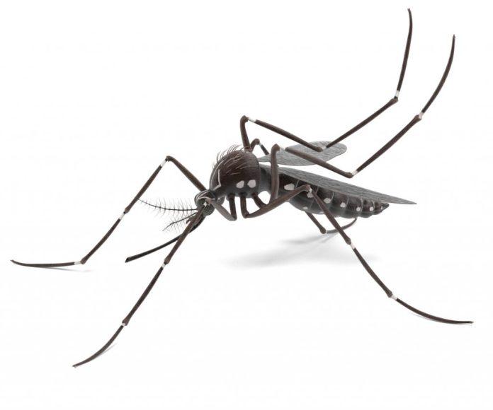 Repelente natural - Febre Amarela, zika, dengue e chikungunya