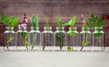 Temperos para cultivar em garrafinhas d'água