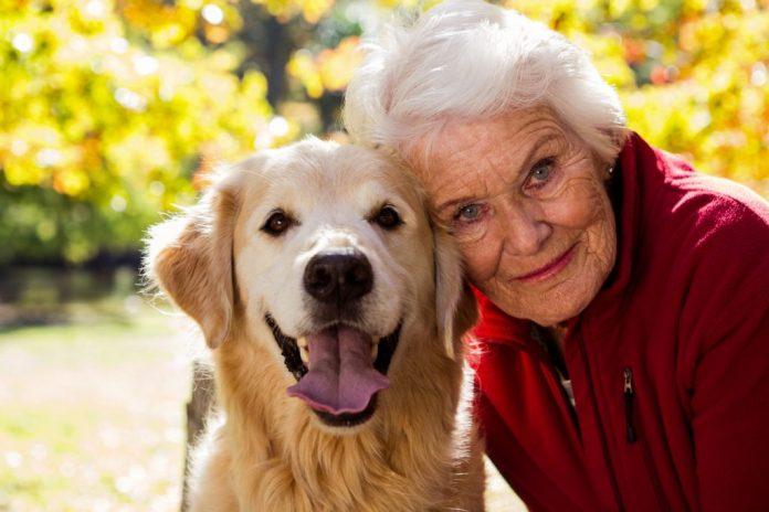 Idosos que possuem cães tem maior expectativa de vida
