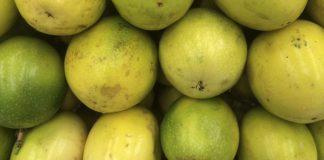 Camu-camu – 30 vezes mais vitamina C que a laranja
