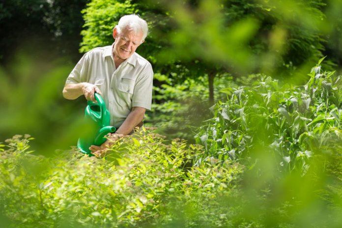 Cada meia hora a mais de atividades físicas como colocar plantas em vasos ou passear com o cachorro estão associados a uma redução de 17% do risco de morte.