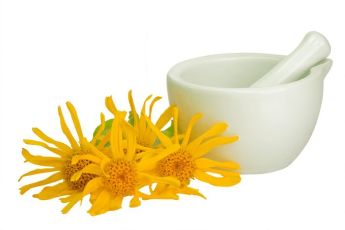 Arnica – Conheça esta planta que tira dores musculares