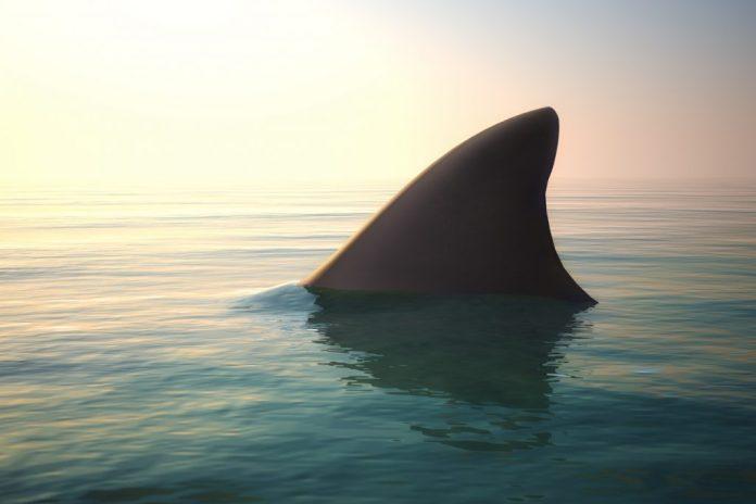 Cartilagem de Tubarão – Funciona? Pra que serve?